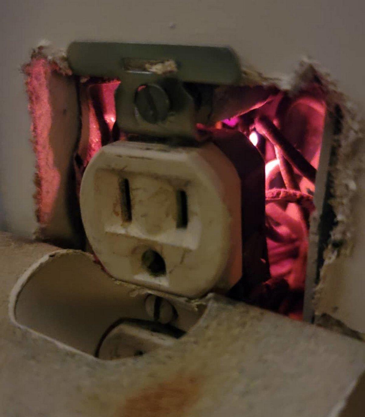 Cette chienne a sauvé sa famille en trouvant un feu caché derrière une prise électrique