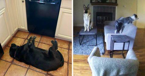 Des gens publient des photos de chiens «défectueux» et on ne sait pas si on doit rire ou se gratter la tête