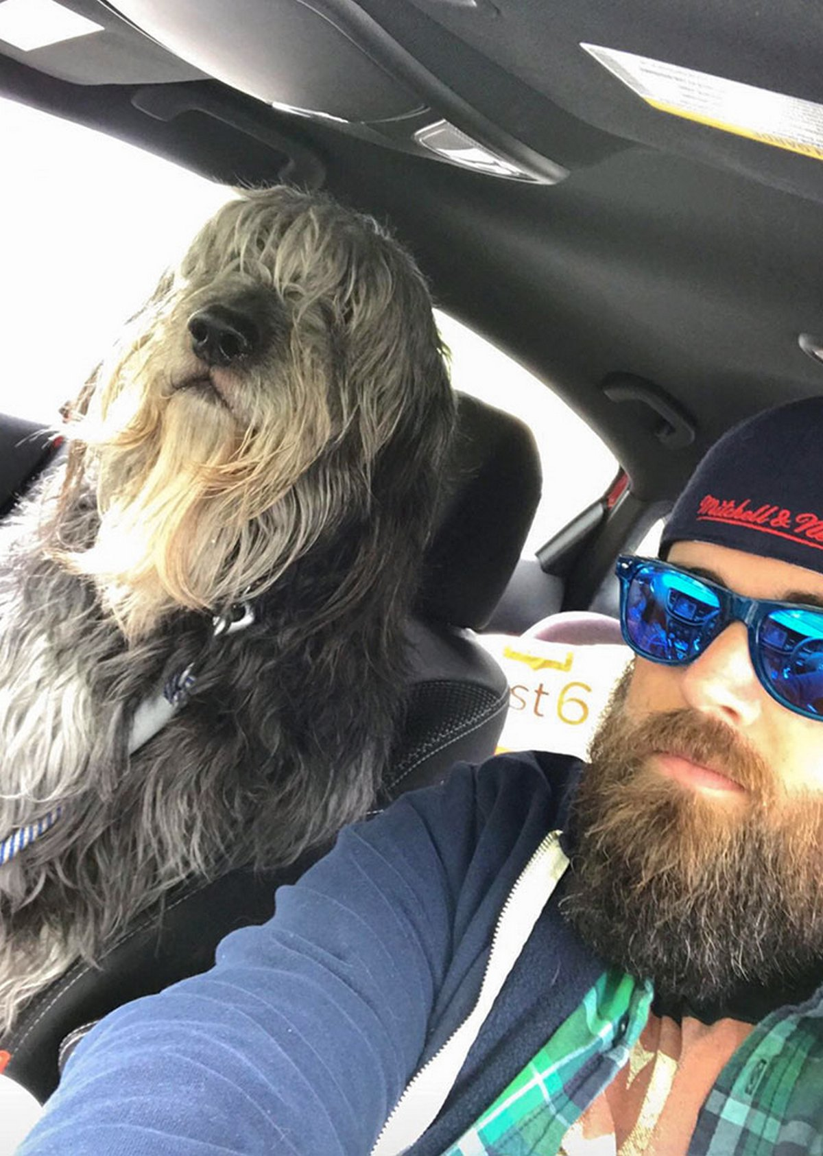 22 chiens géants qui ne comprennent pas à quel point ils sont gros ! Par Janvier Doyon Chiens-enormes-004