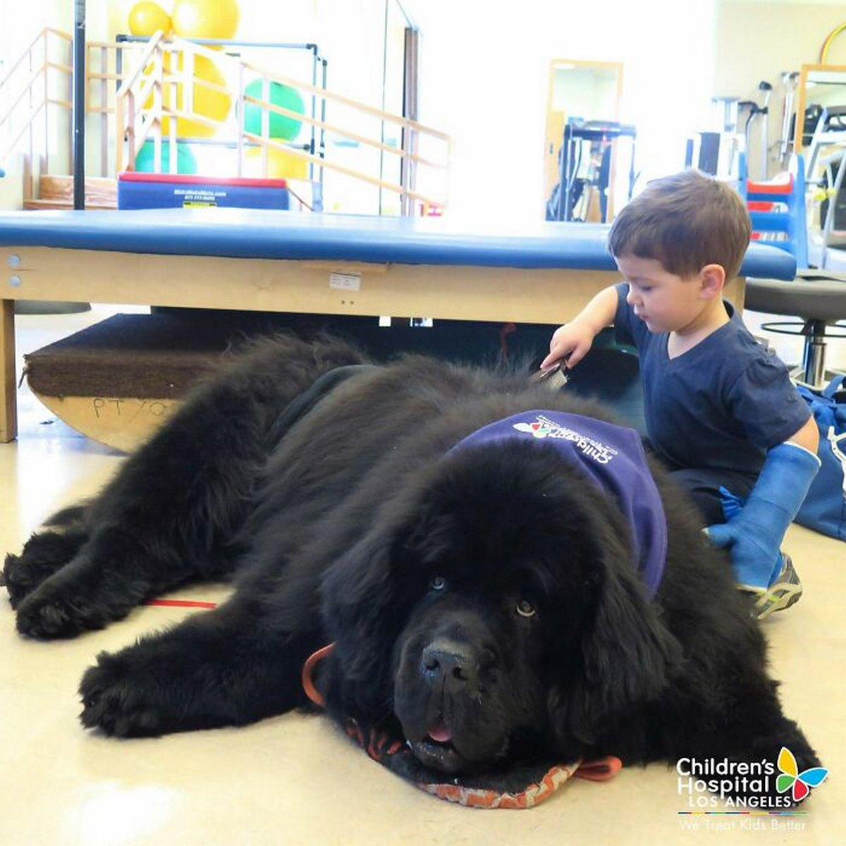 22 chiens géants qui ne comprennent pas à quel point ils sont gros ! Par Janvier Doyon Chiens-enormes-008