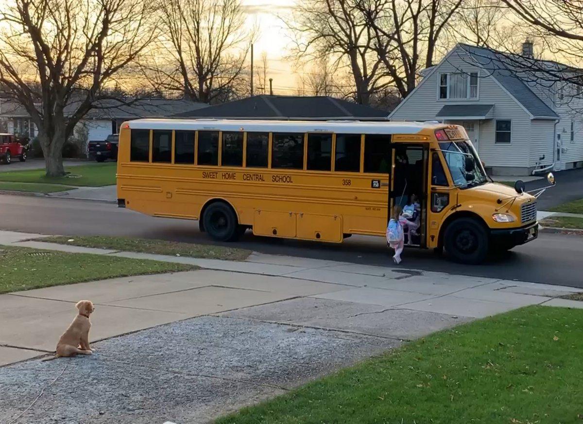 Ce chiot s'assure que ses soeurs montent dans le bus scolaire en toute sécurité chaque matin