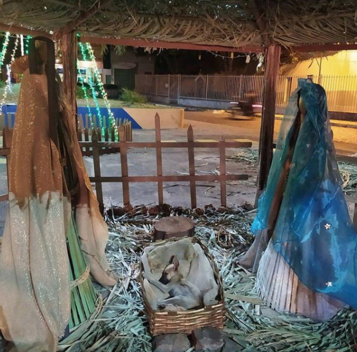 Une femme passant près d'une crèche de Noël remarque un chiot qui dort dans la mangeoire
