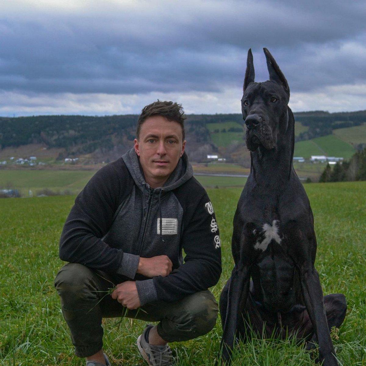 Ce dogue allemand ressemble à Batman et les gens l'adorent