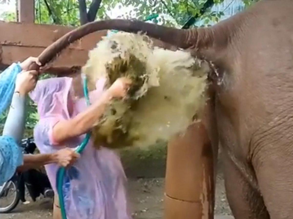 Un vétérinaire reçoit le caca d'un éléphant en plein visage alors qu'il soulage la constipation de l'animal