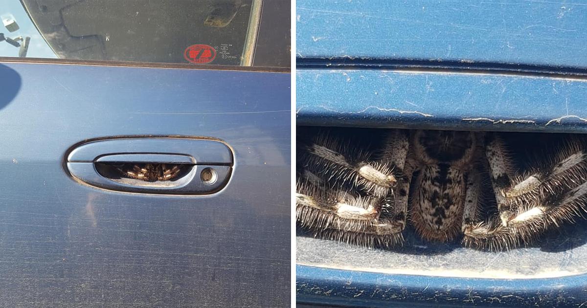 Une femme trouve une énorme araignée cachée sous la poignée de porte de sa voiture