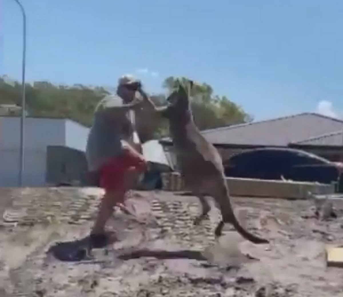 Ce père s'est fait frapper par un kangourou alors qu'il tentait de défendre ses enfants