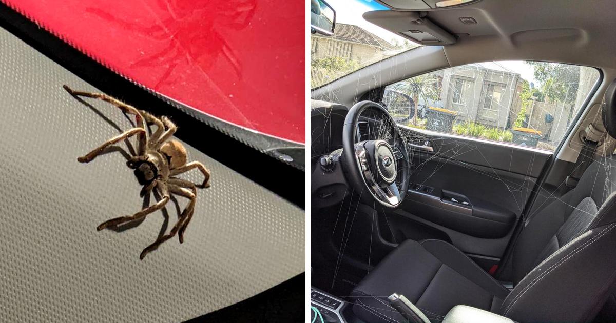 Une femme découvre que des bébés araignées ont tissé une énorme toile dans sa voiture