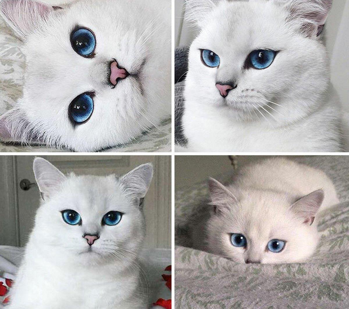 Ces blagues sur les chats ont été créées par des gens qui vivent assurément avec un minou