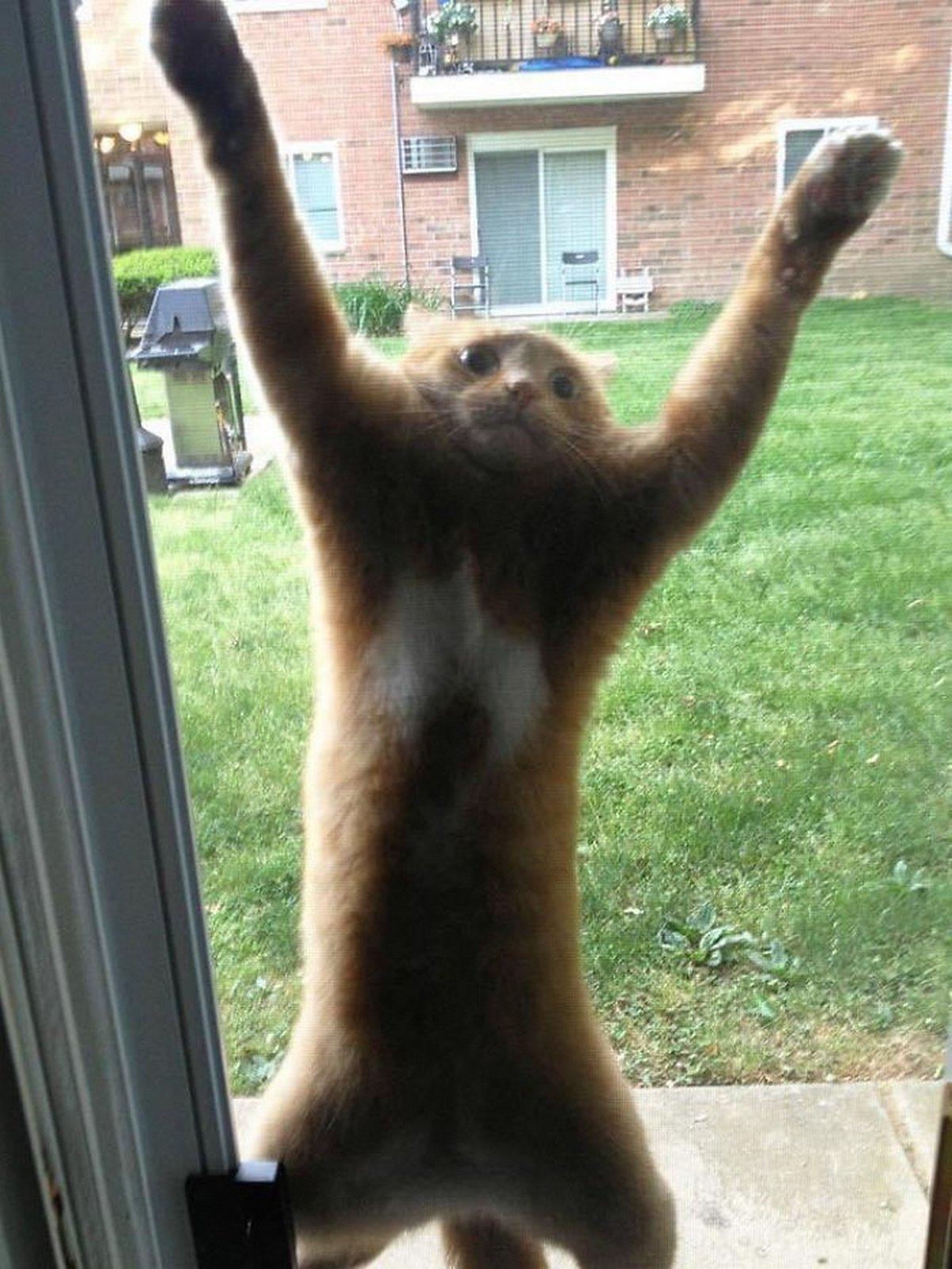 Des gens partagent des photos de leurs chats «défectueux» dans ce groupe en ligne et voici les 22 plus drôles
