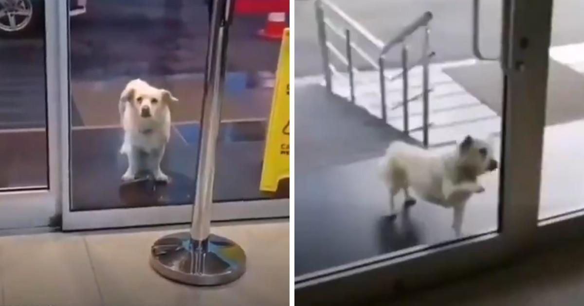 Ce chien fidèle attend son propriétaire devant un hôpital depuis des jours