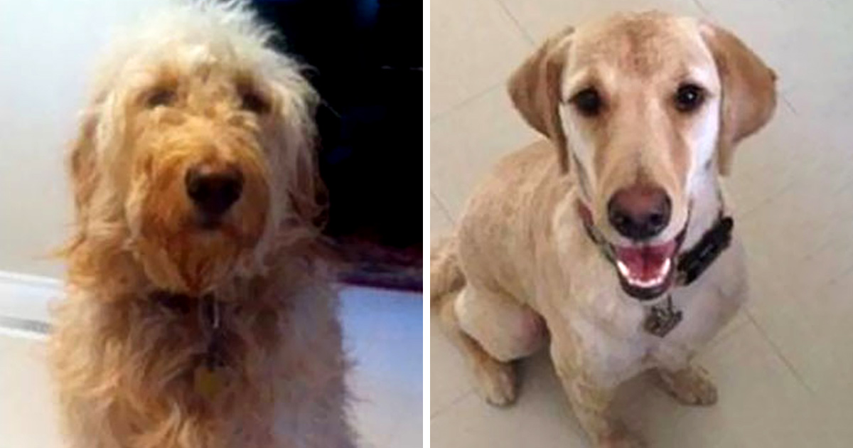 Ces gens ont emmené leur chien chez le toiletteur et ont cru récupérer le mauvais toutou
