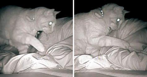 Une femme se réveille toujours fatiguée, alors elle installe une caméra et aperçoit son chat qui tape son corps pendant 4 heures d'affilée