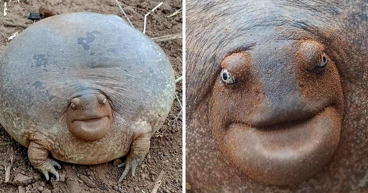 Les gens ont du mal à croire que cet animal existe dans la vraie vie