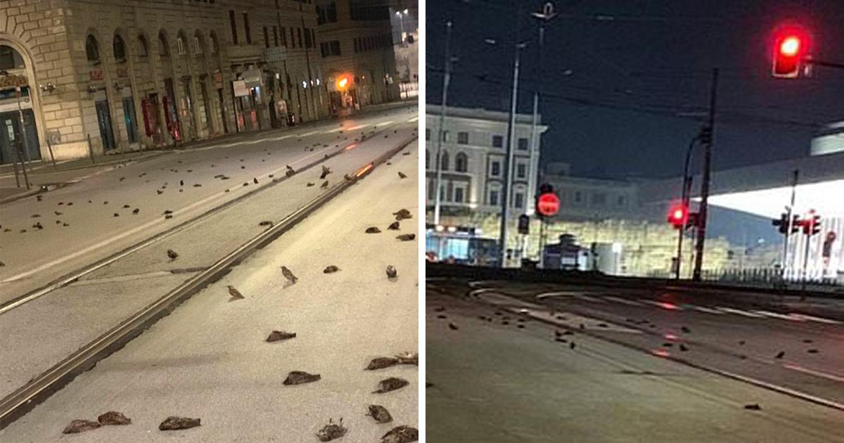 Des centaines d'oiseaux trouvés morts dans les rues après le feu d'artifice du Nouvel An à Rome