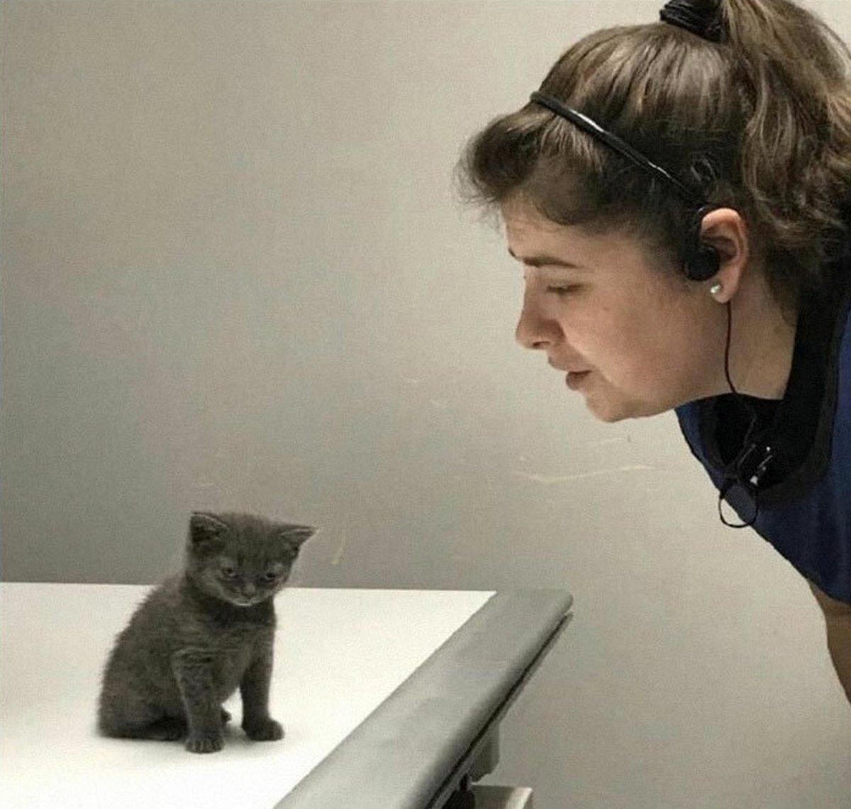 Ce groupe en ligne célèbre les chatons qui sont «illégalement petits et mignons» et voici les 22 photos les plus adorables