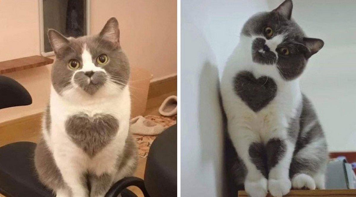 Voici d'excellentes raisons pour lesquelles vous devriez avoir un chat