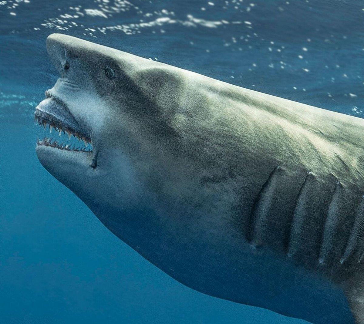 Un requin qui ressemble à Donald Trump aperçu en Floride
