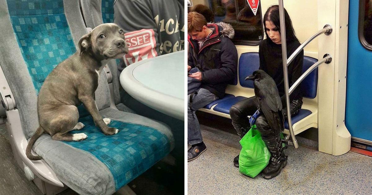 Ces animaux ont dû voyager et se sont quand même comportés de manière plus civilisée que beaucoup d'humains