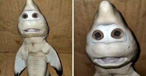 Un bébé requin à visage «humain» surprend un pêcheur