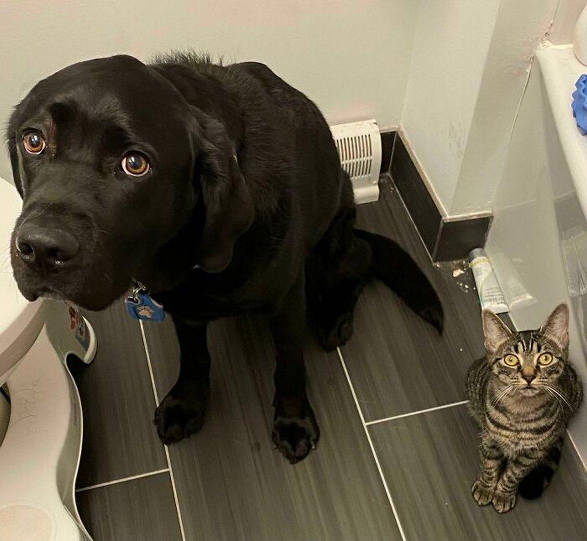 «Qu'est-ce qu'il a, ton chien?» : des gens partagent des photos de leurs chiens «défectueux» dans ce groupe en ligne