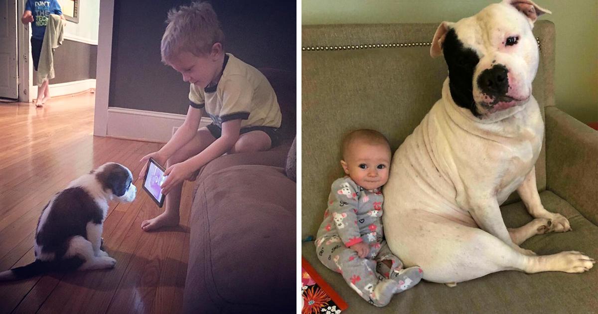 Si tu penses que tes enfants n'ont pas besoin d'un chien après avoir vu ces images, tu dois être un chat