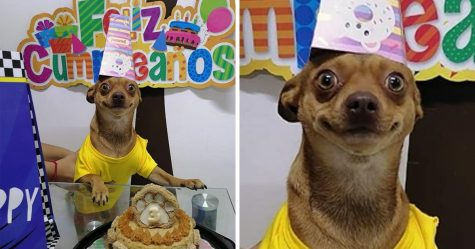 Ce petit chien est si heureux que les gens se sont souvenus de son anniversaire