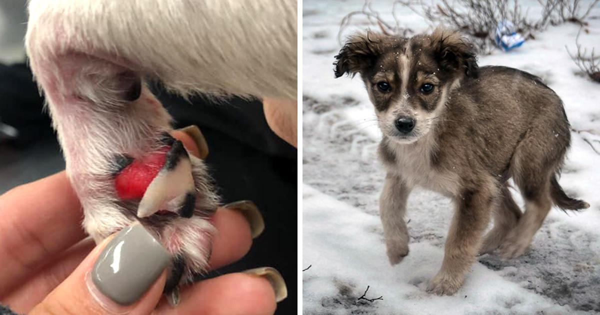 Des vétérinaires préviennent que le sel et le gravier utilisés sur les routes glacées peuvent être très dangereux pour les chiens