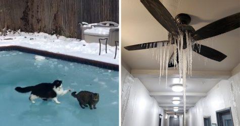 Ces photos montrent comment le Texas fait face aux températures les plus froides en plus de 30 ans