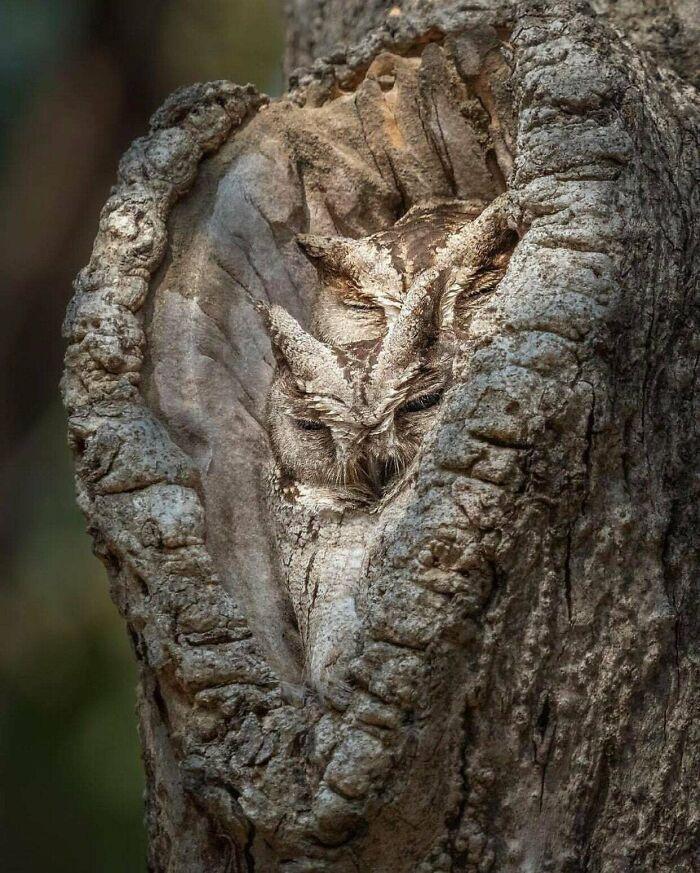 Dans ce groupe en ligne, les gens partagent des camouflages accidentels et voici les meilleures images