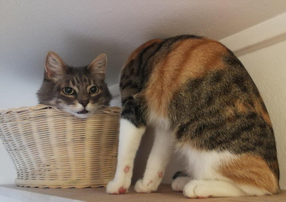 Les gens ont du mal à comprendre cette photo de chats flippante