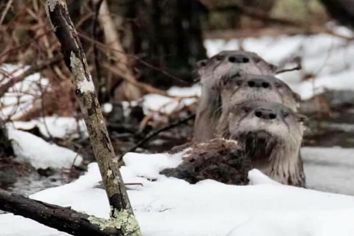 Ce groupe Facebook se consacre aux photos d'animaux sauvages pourries et elles sont si nulles qu'elles sont hilarantes
