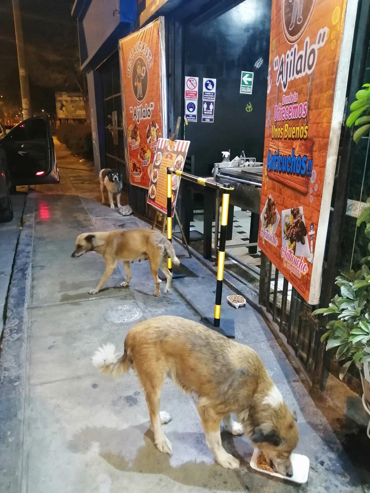 Ce gentil restaurateur prépare des repas gratuits pour tous les chiens errants qui visitent son restaurant