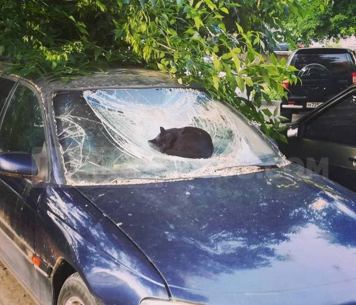 Les gens rient de ces chats qui traînent dans des endroits où ils ne devraient pas être