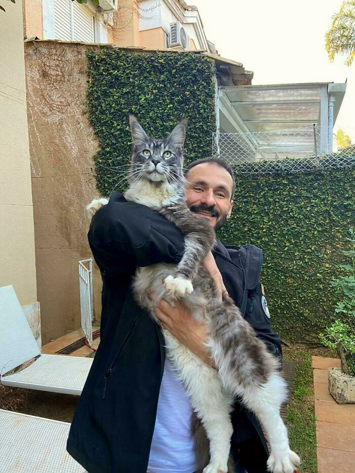 Ces chats ne comprennent pas à quel point ils sont grands