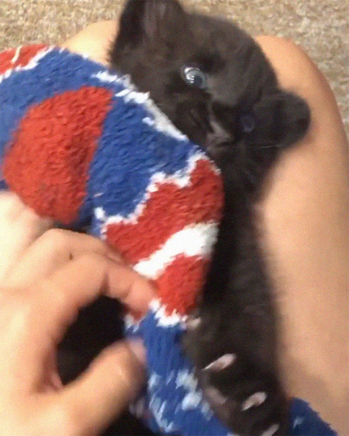 Une panthère abandonnée par sa mère grandit avec un humain et un rottweiler