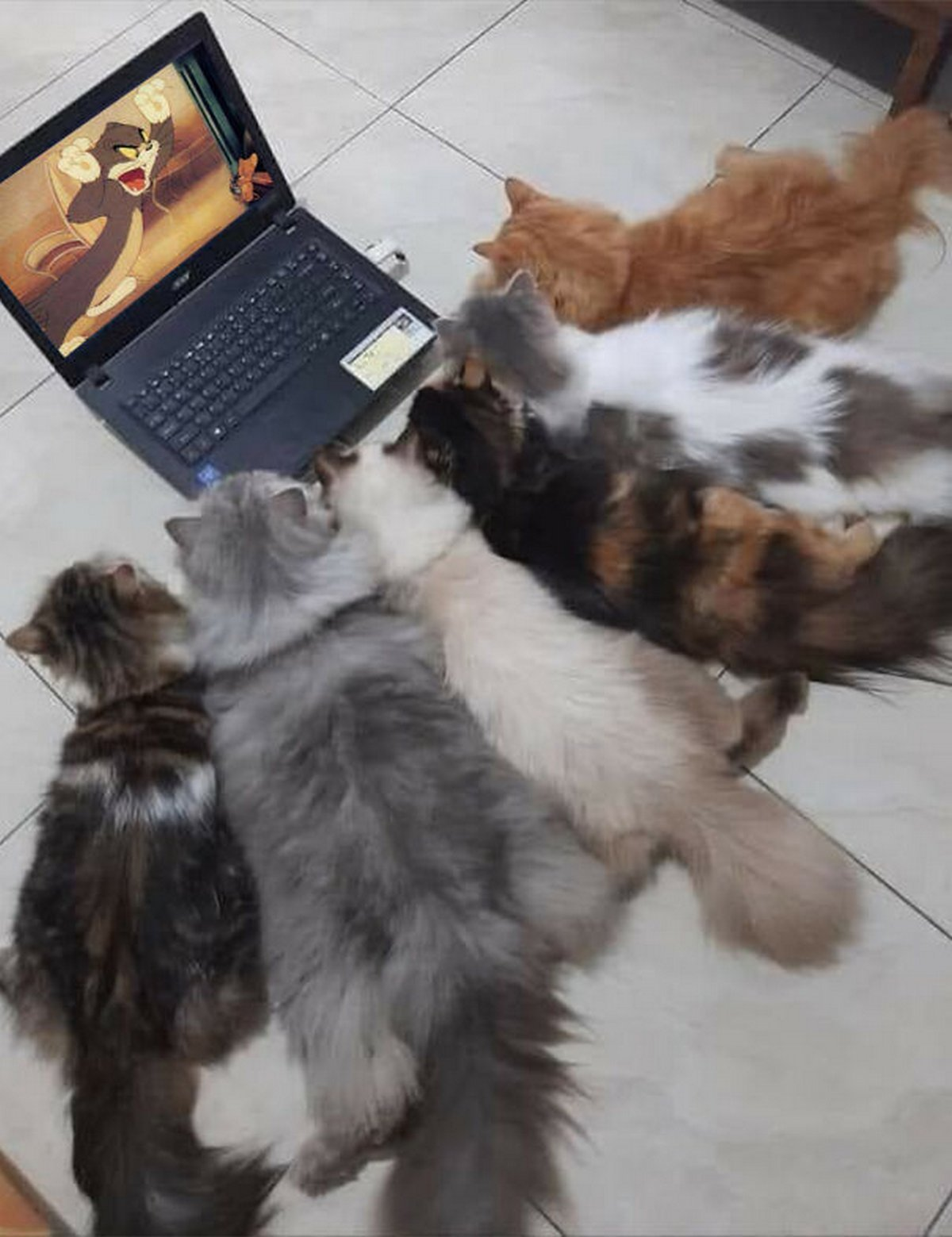 Cette page Facebook se consacre aux photos d'animaux qui doivent absolument être vues