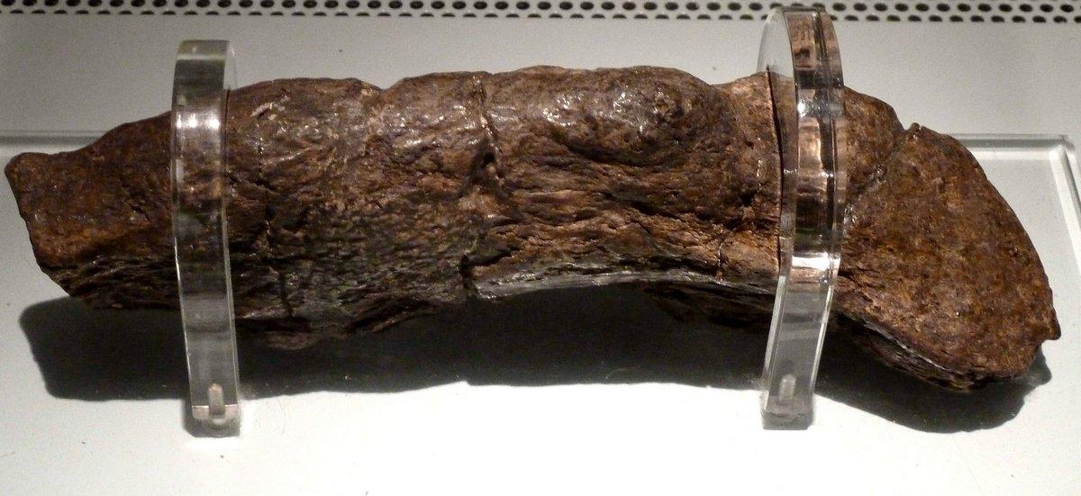 Le plus grand caca humain connu mesure 20 cm de long et remonte à un roi du 9e siècle