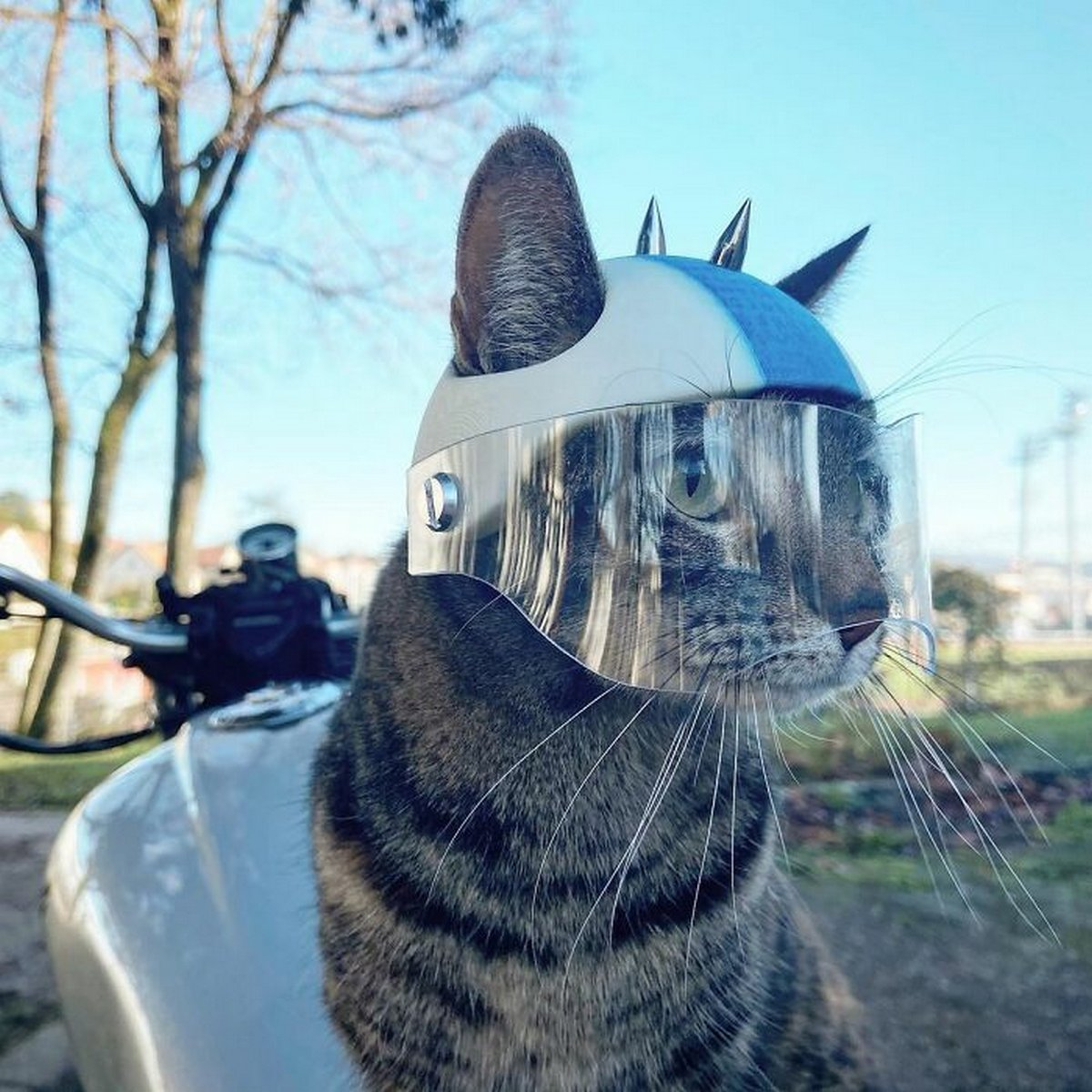 Cet homme emmène sa chatte partout où il va et ils vivent toutes sortes d'aventures ensemble