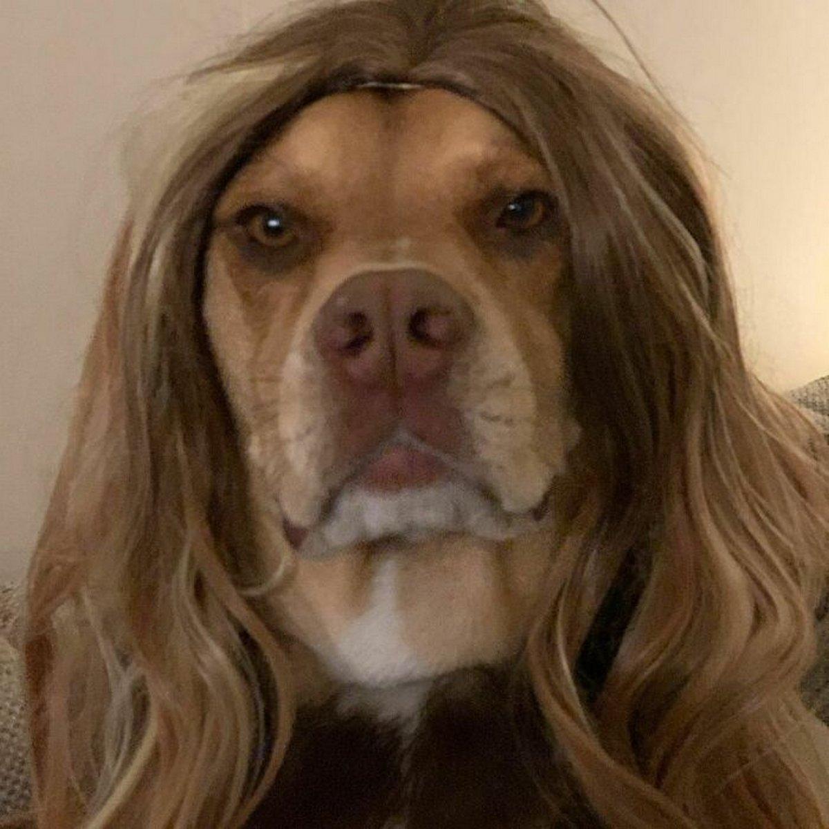 Ces gens ont partagé des photos de leurs chiens avec des perruques