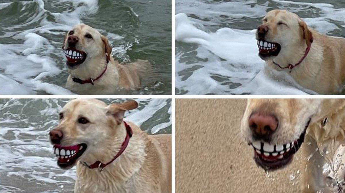 Ces photos drôles de chiens vont vous faire sourire