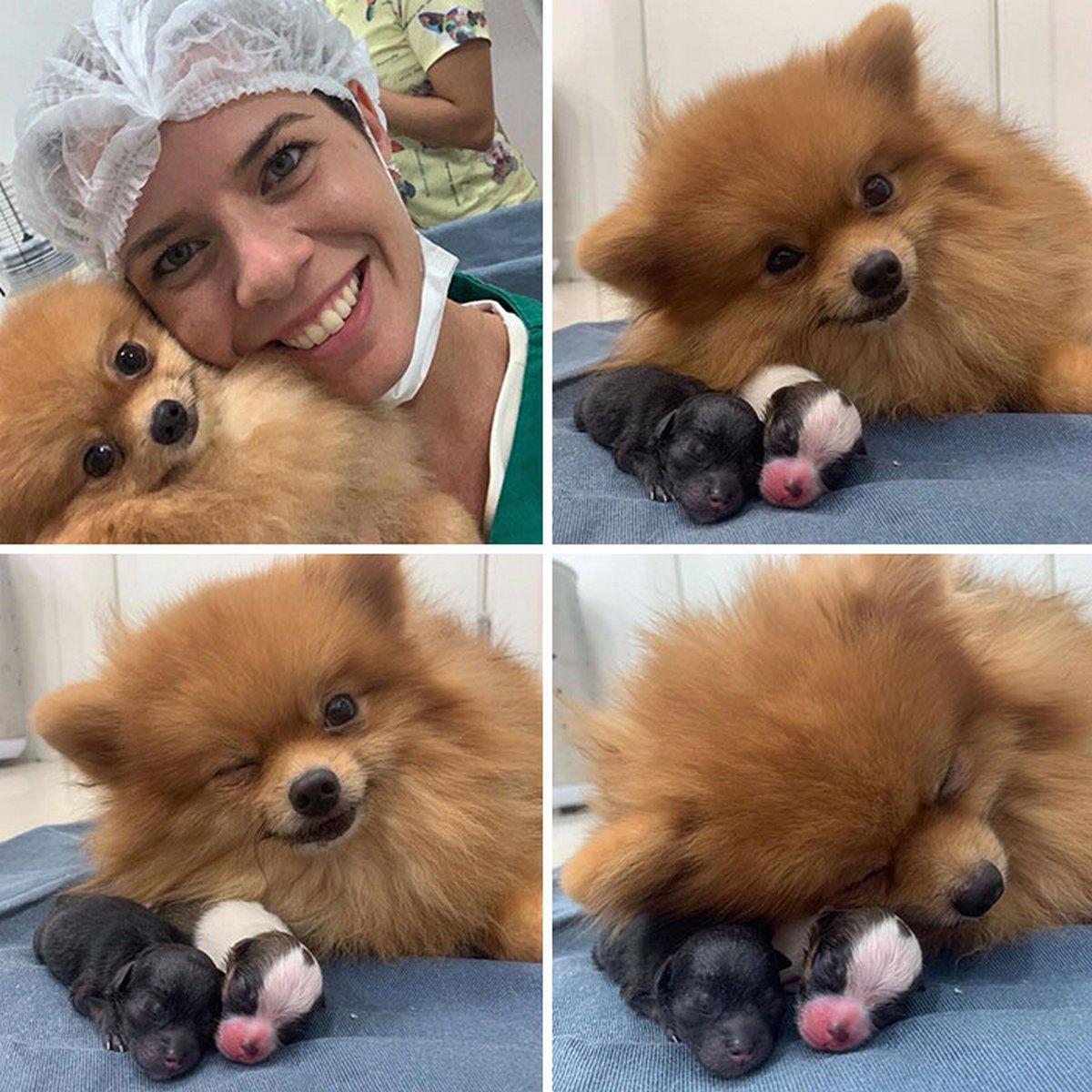 Ces vétérinaires ont rencontré les animaux les plus mignons au travail et n'ont pas hésité à prendre une photo