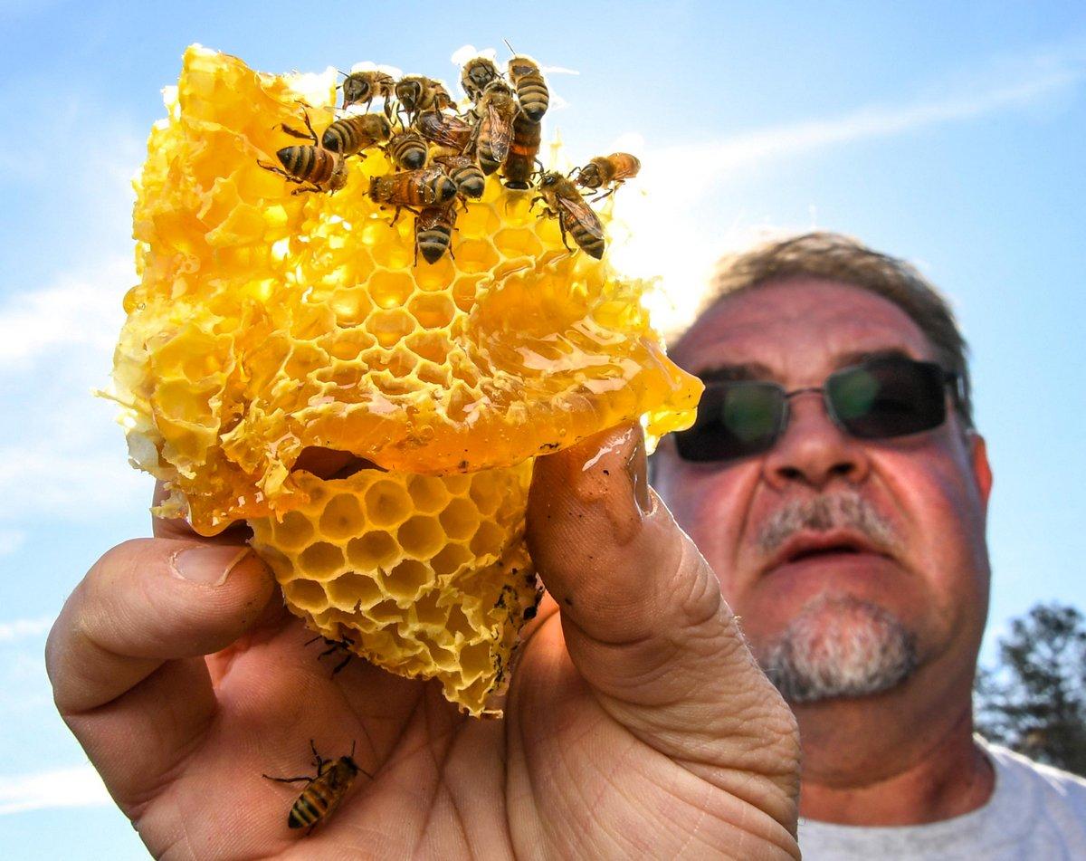 Des voisins s'opposent à un apiculteur qui refuse d'abandonner ses abeilles pour le bien de l'enfant allergique d'un voisin