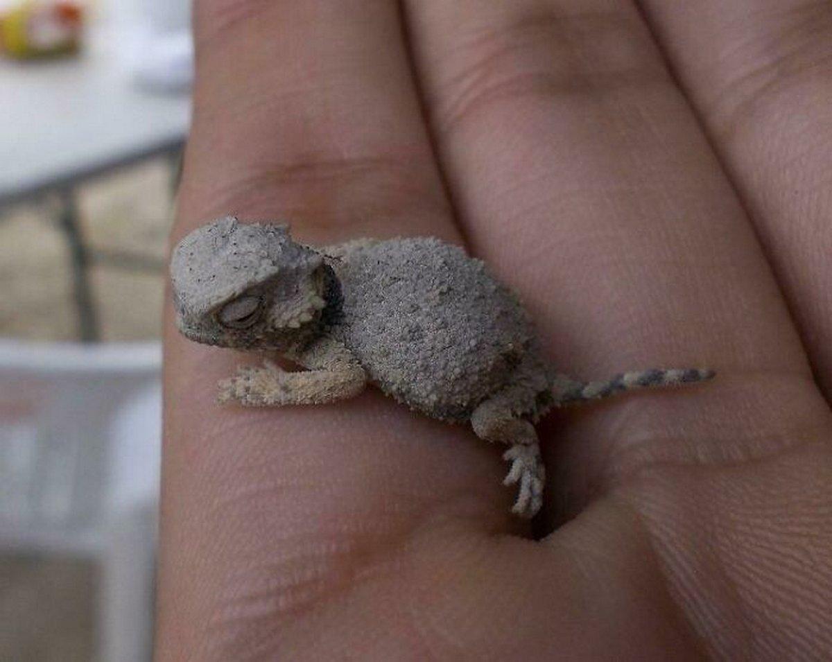 Voici des photos craquantes de très petits animaux sur les doigts de la main