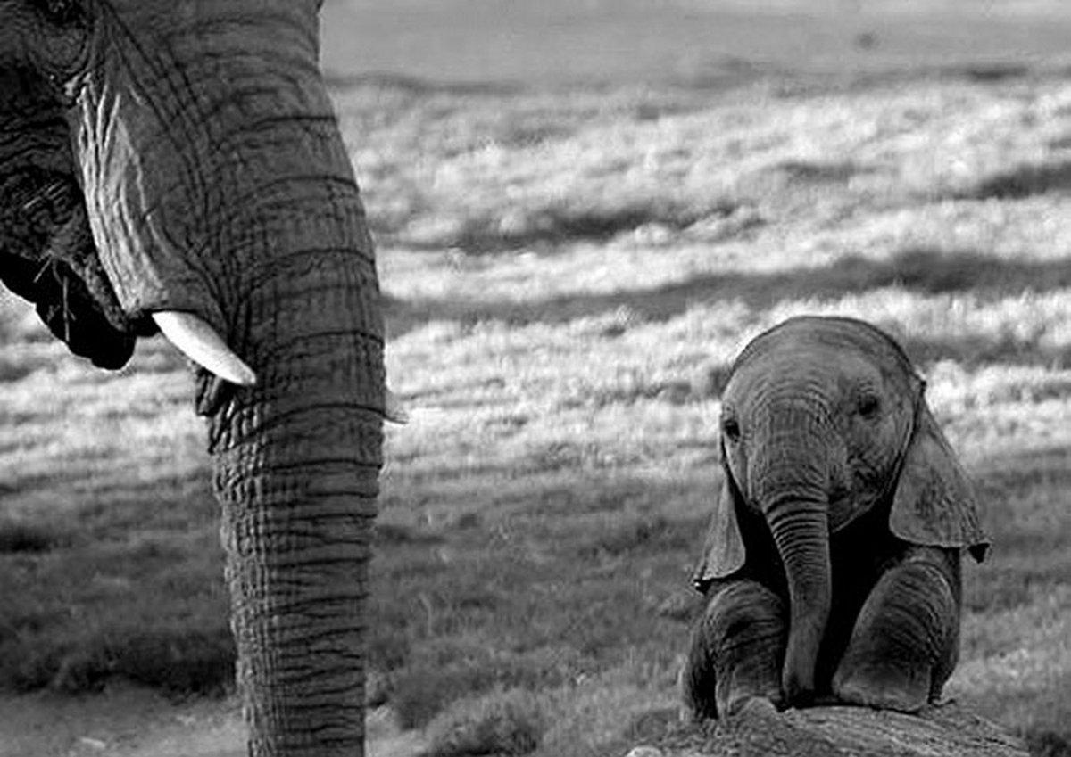 Voici d'adorables photos de bébés animaux pour égayer votre journée