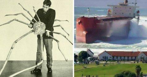 Ces photos de choses énormes vont faire peur aux personnes souffrant de mégalophobie