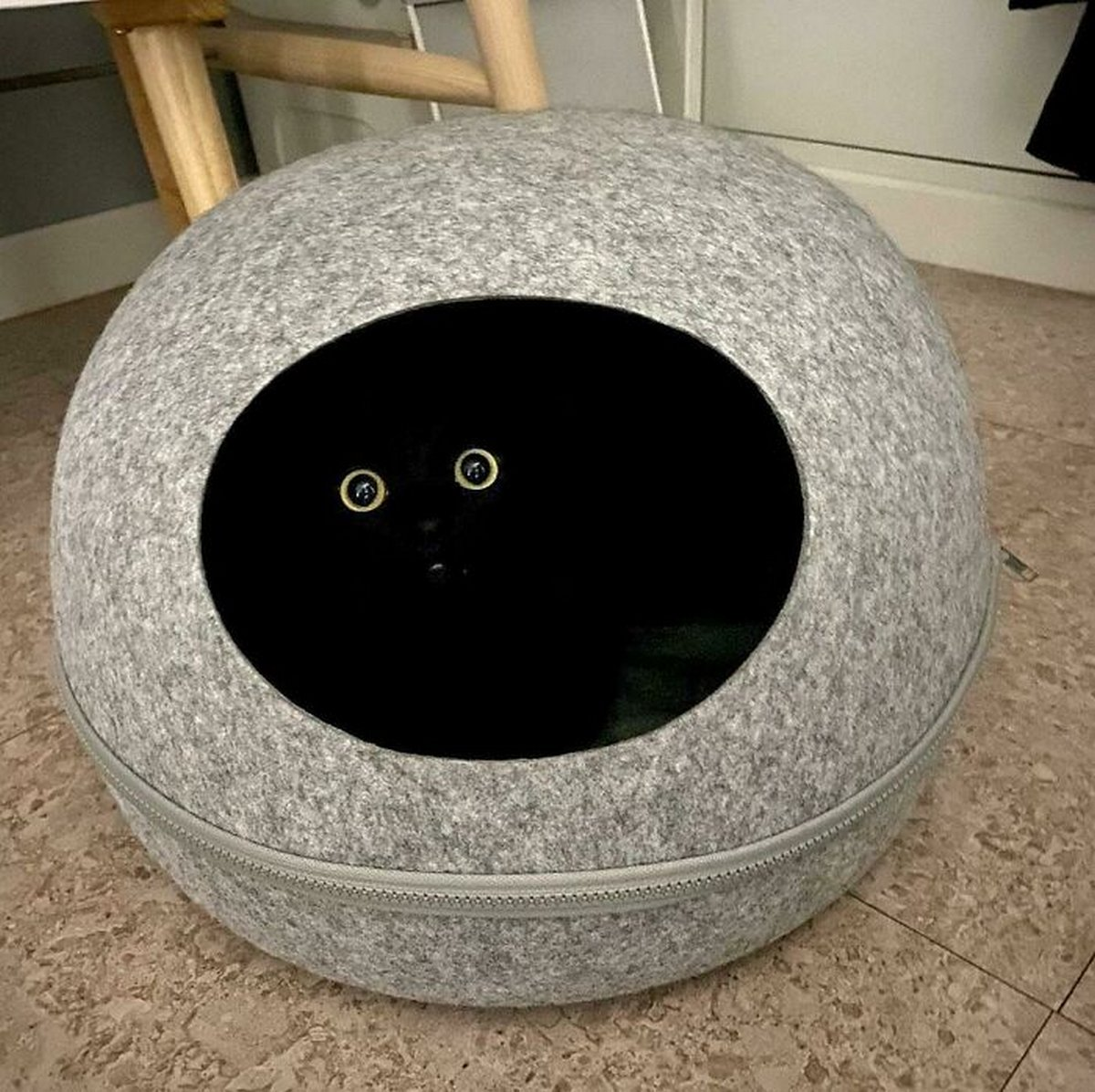 Voici les photos de chats les plus drôles du Web