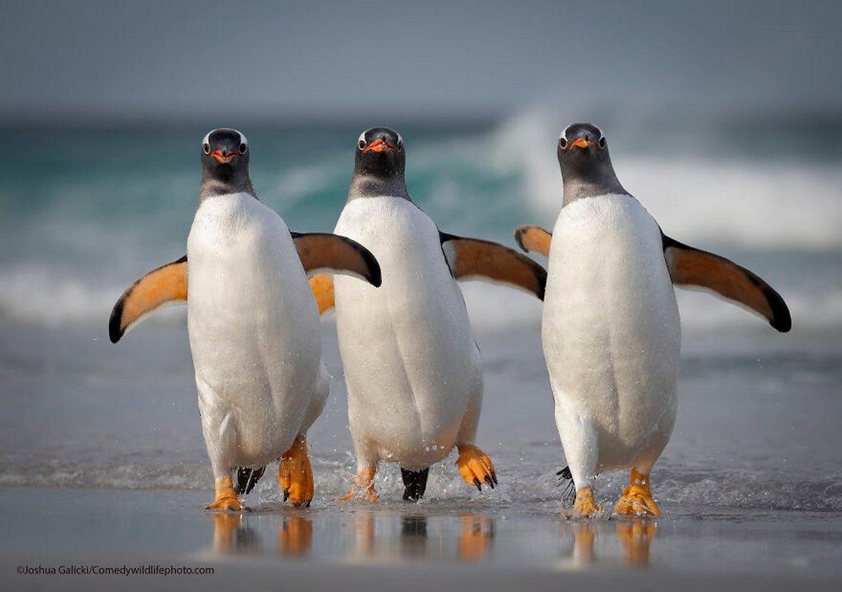 Les Comedy Wildlife Photography Awards viennent d'annoncer les finalistes de 2021 et voici les photos d'animaux les plus drôles